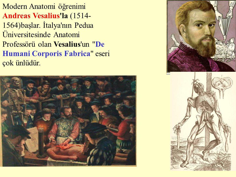 Modern Anatomi öğrenimi Andreas Vesalius'la (1514- 1564)başlar. İtalya'nın Pedua Üniversitesinde Anatomi Professörü olan Vesalius'un