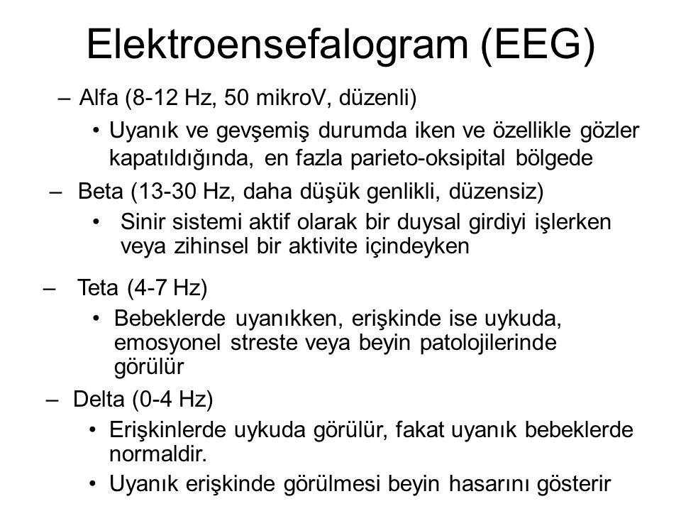 Elektroensefalogram (EEG) –Alfa (8-12 Hz, 50 mikroV, düzenli) Uyanık ve gevşemiş durumda iken ve özellikle gözler kapatıldığında, en fazla parieto-oksipital bölgede – Beta (13-30 Hz, daha düşük genlikli, düzensiz) Sinir sistemi aktif olarak bir duysal girdiyi işlerken veya zihinsel bir aktivite içindeyken – Teta (4-7 Hz) Bebeklerde uyanıkken, erişkinde ise uykuda, emosyonel streste veya beyin patolojilerinde görülür – Delta (0-4 Hz) Erişkinlerde uykuda görülür, fakat uyanık bebeklerde normaldir.