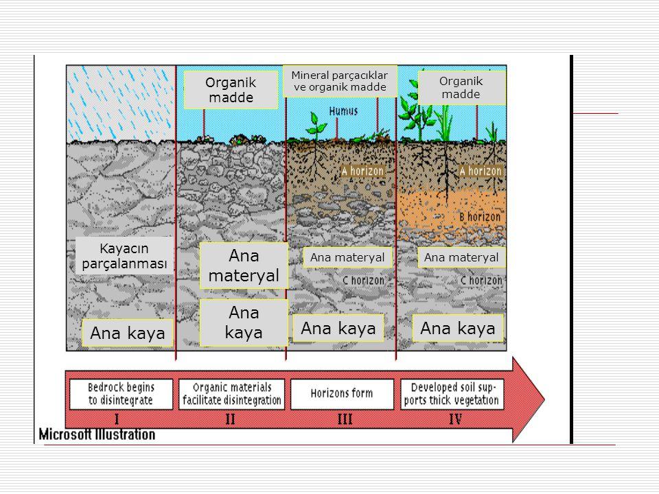 Kayacın parçalanması Ana kaya Organik madde Ana kaya Ana materyal Organik madde Mineral parçacıklar ve organik madde