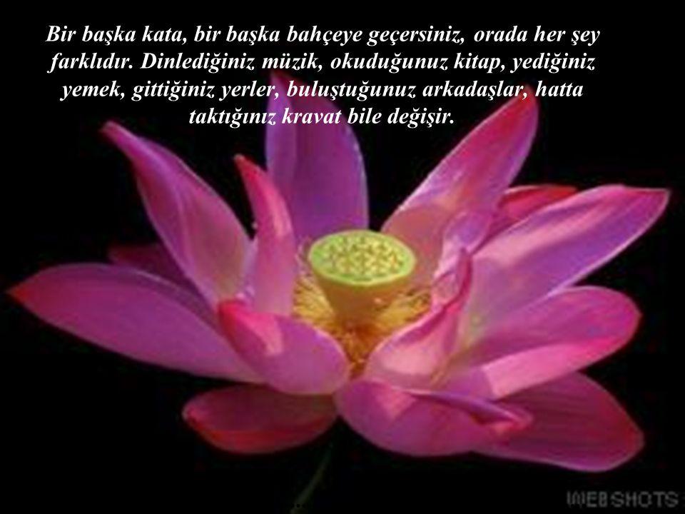 Birlikte olduğunuz kadın değiştiğinde, değişen yalnızca bir kadın değildir, hayatın neredeyse bütünü değişir..........................................