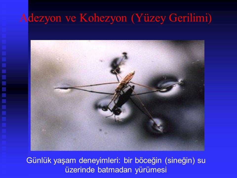 Günlük yaşam deneyimleri: bir böceğin (sineğin) su üzerinde batmadan yürümesi Adezyon ve Kohezyon (Yüzey Gerilimi)