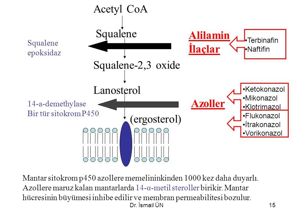 Dr. İsmail ÜN15 Acetyl CoA Squalene Lanosterol (ergosterol) Alilamin İlaçlar Azoller Squalene-2,3 oxide Squalene epoksidaz 14-a-demethylase Bir tür si