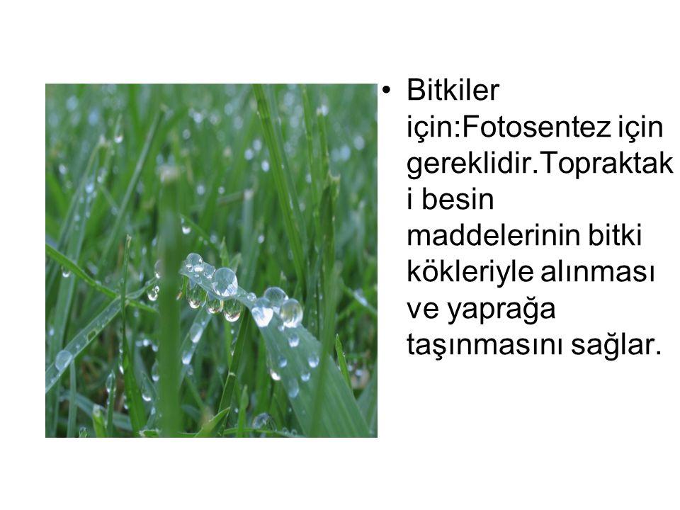 Bitkiler için:Fotosentez için gereklidir.Topraktak i besin maddelerinin bitki kökleriyle alınması ve yaprağa taşınmasını sağlar.