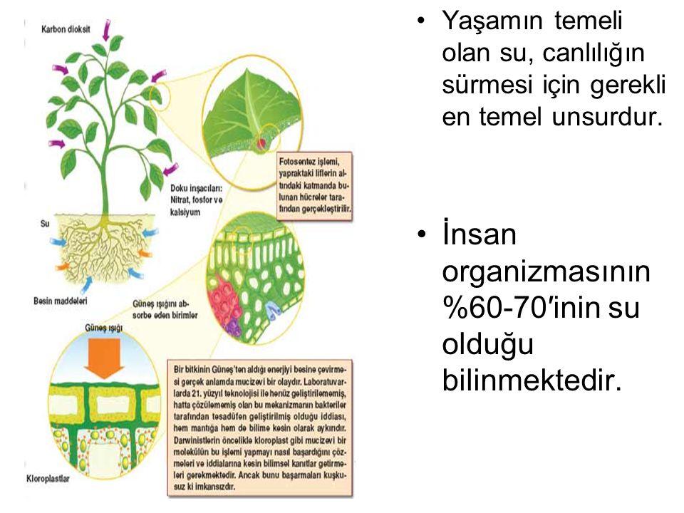 Düzenli olarak sulanan bitki, sağlıklı bir biçimde büyür ve gelişir.