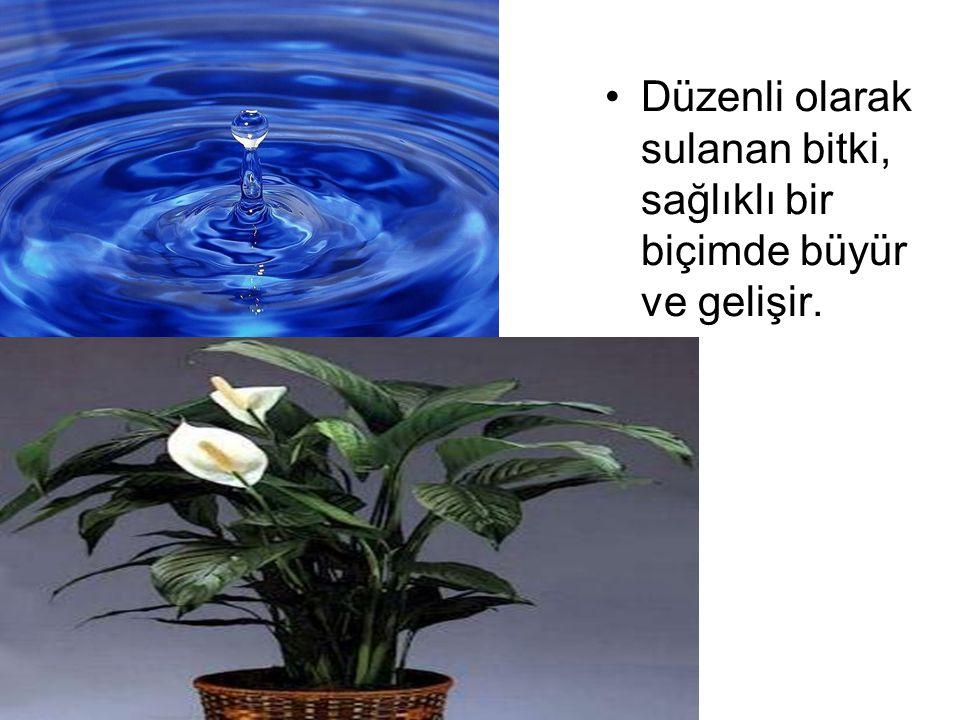 BİYOLOJİK ÇEŞİTLİLİK olarak; Su Türler için yaşam ortamı oluşturur.