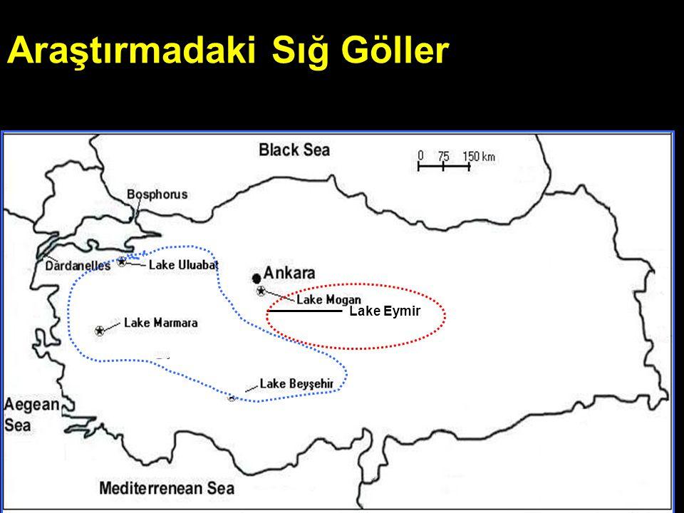 Araştırmadaki Sığ Göller Lake Eymir