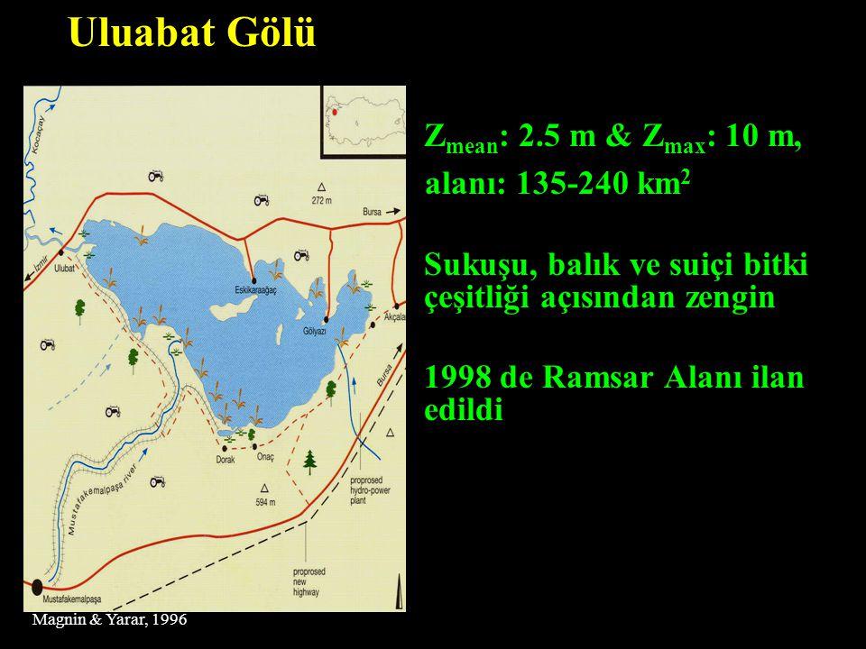  Z mean : 2.5 m & Z max : 10 m, alanı: 135-240 km 2  Sukuşu, balık ve suiçi bitki çeşitliği açısından zengin  1998 de Ramsar Alanı ilan edildi Ulua