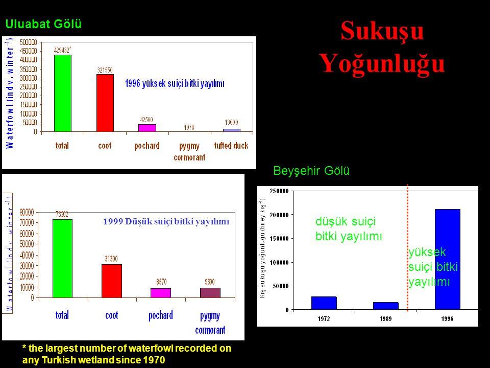 Sukuşu Yoğunluğu 1999 Düşük suiçi bitki yayılımı * the largest number of waterfowl recorded on any Turkish wetland since 1970 Abundant vegetation Spar