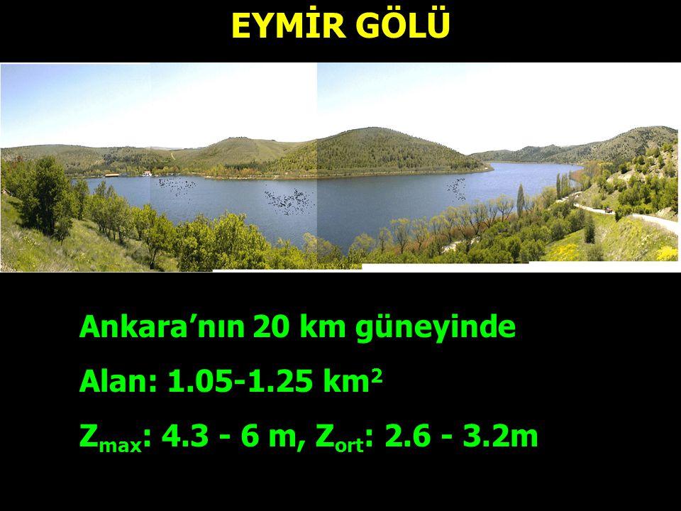 EYMİR GÖLÜ Ankara'nın 20 km güneyinde Alan: 1.05-1.25 km 2 Z max : 4.3 - 6 m, Z ort : 2.6 - 3.2m