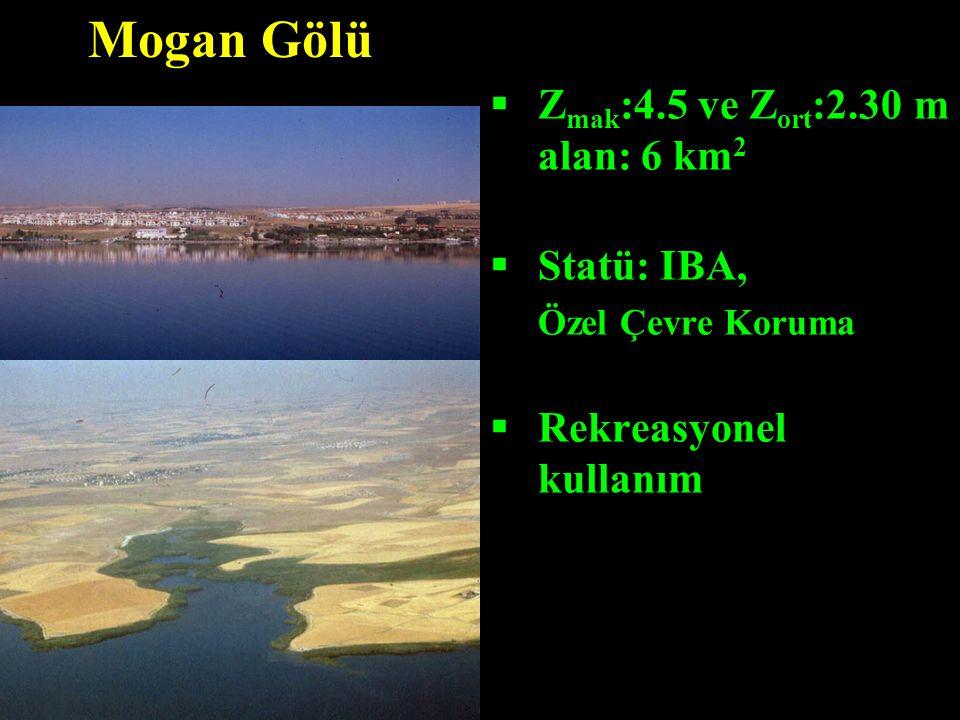  Z mak :4.5 ve Z ort :2.30 m alan: 6 km 2  Statü: IBA, Özel Çevre Koruma  Rekreasyonel kullanım Mogan Gölü