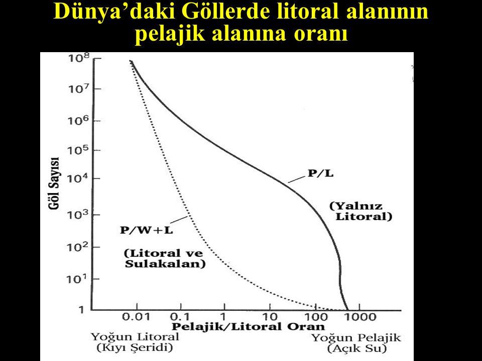Dünya'daki Göllerde litoral alanının pelajik alanına oranı