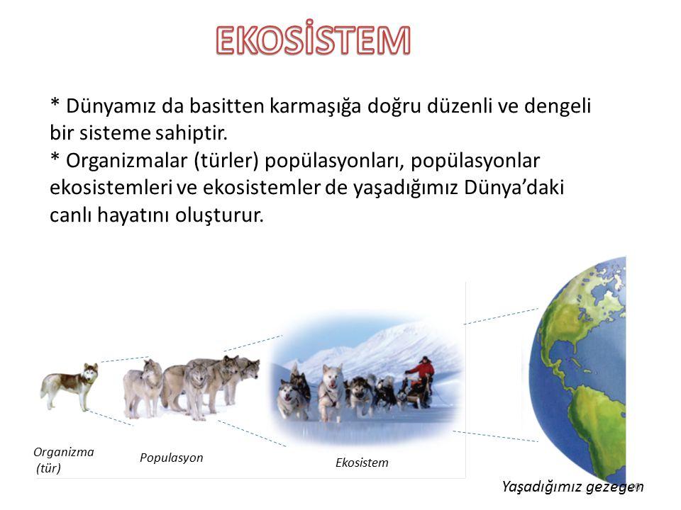 * Dünyamız da basitten karmaşığa doğru düzenli ve dengeli bir sisteme sahiptir. * Organizmalar (türler) popülasyonları, popülasyonlar ekosistemleri ve