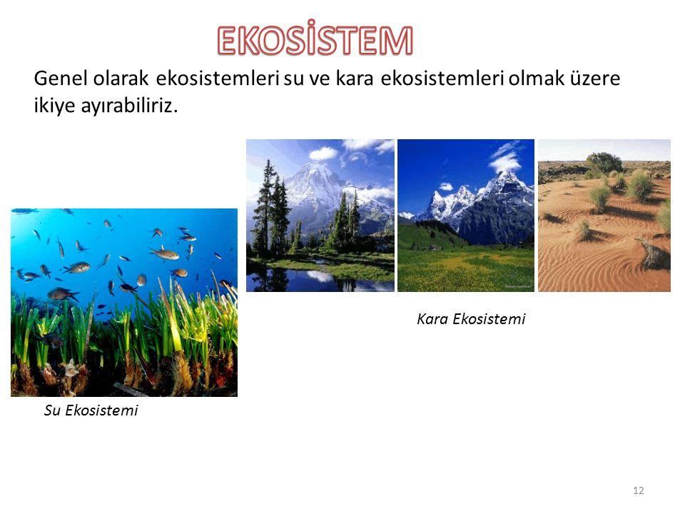 Genel olarak ekosistemleri su ve kara ekosistemleri olmak üzere ikiye ayırabiliriz. Su Ekosistemi Kara Ekosistemi 12