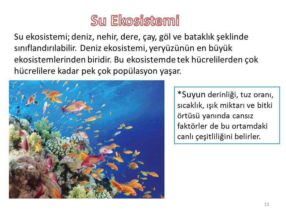 Su ekosistemi; deniz, nehir, dere, çay, göl ve bataklık şeklinde sınıflandırılabilir. Deniz ekosistemi, yeryüzünün en büyük ekosistemlerinden biridir.