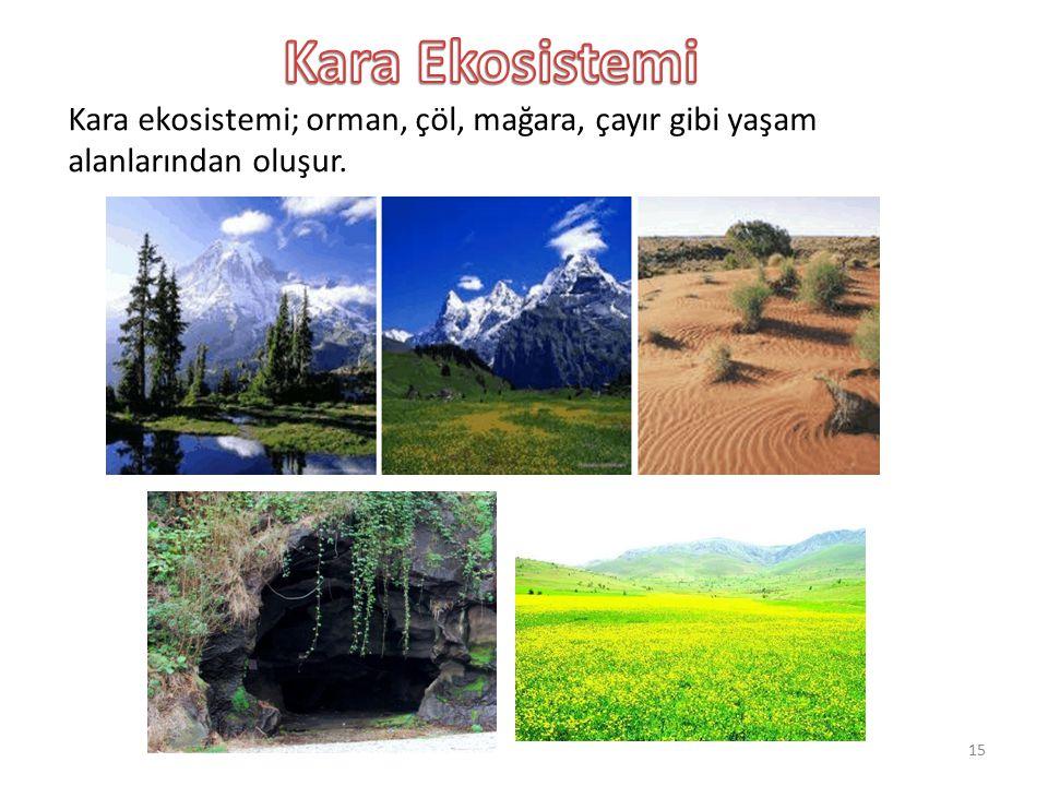 Kara ekosistemi; orman, çöl, mağara, çayır gibi yaşam alanlarından oluşur. 15