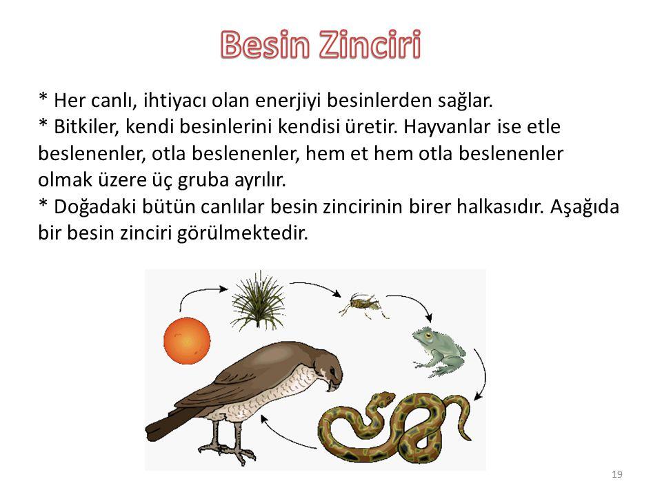 * Her canlı, ihtiyacı olan enerjiyi besinlerden sağlar. * Bitkiler, kendi besinlerini kendisi üretir. Hayvanlar ise etle beslenenler, otla beslenenler