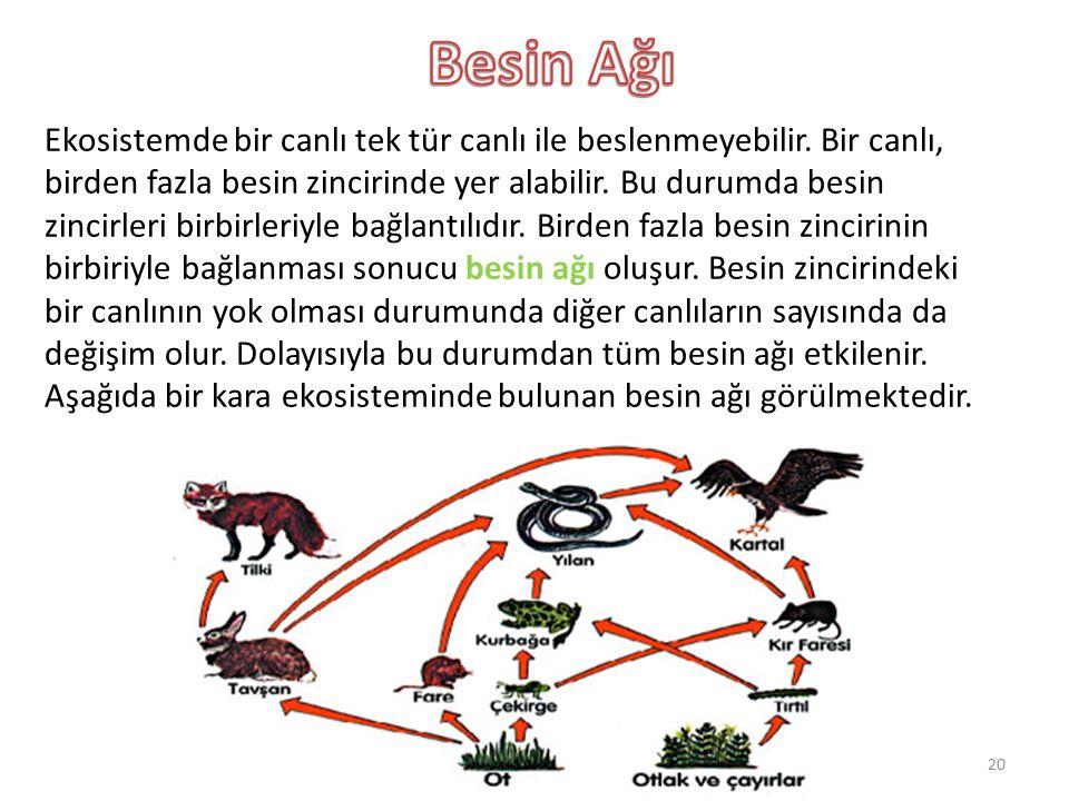 Ekosistemde bir canlı tek tür canlı ile beslenmeyebilir. Bir canlı, birden fazla besin zincirinde yer alabilir. Bu durumda besin zincirleri birbirleri