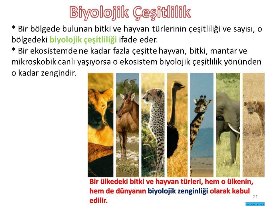 * Bir bölgede bulunan bitki ve hayvan türlerinin çeşitliliği ve sayısı, o bölgedeki biyolojik çeşitliliği ifade eder. * Bir ekosistemde ne kadar fazla