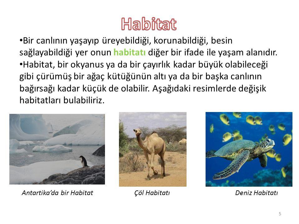 Bir canlının yaşayıp üreyebildiği, korunabildiği, besin sağlayabildiği yer onun habitatı diğer bir ifade ile yaşam alanıdır. Habitat, bir okyanus ya d