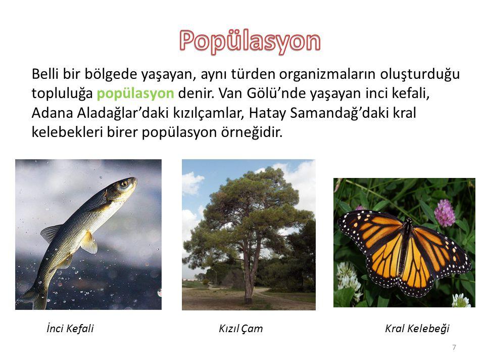 Belli bir bölgede yaşayan, aynı türden organizmaların oluşturduğu topluluğa popülasyon denir. Van Gölü'nde yaşayan inci kefali, Adana Aladağlar'daki k