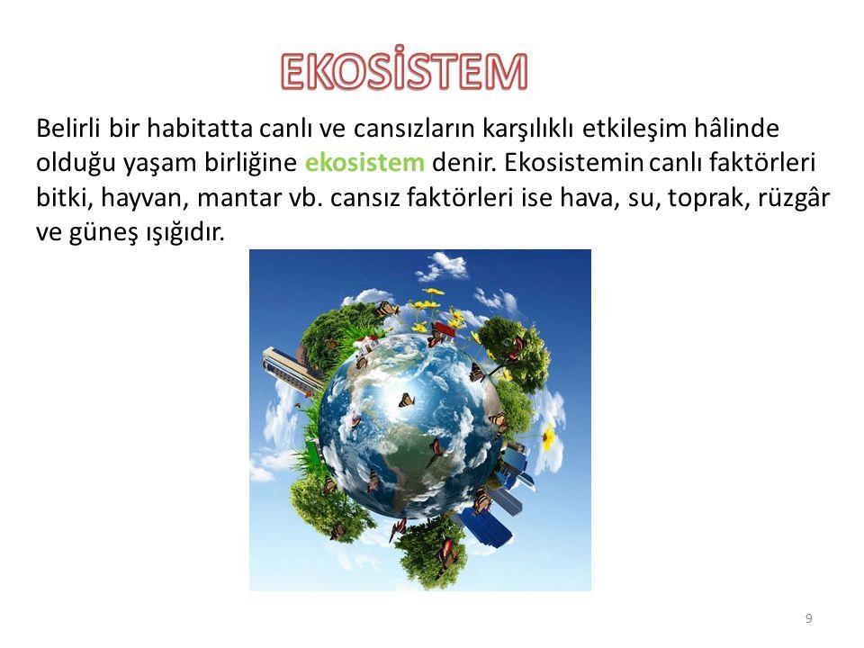 Belirli bir habitatta canlı ve cansızların karşılıklı etkileşim hâlinde olduğu yaşam birliğine ekosistem denir. Ekosistemin canlı faktörleri bitki, ha