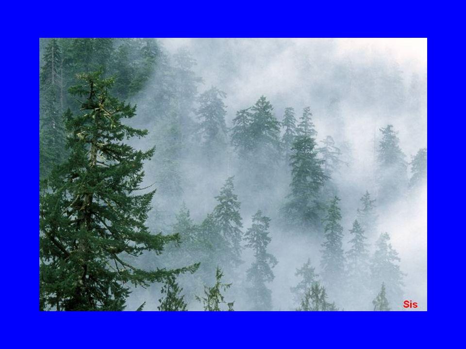 II.Cephe Sisleri: Cephe üzerinde, ön veya arka kısmında görülen sislerdir.