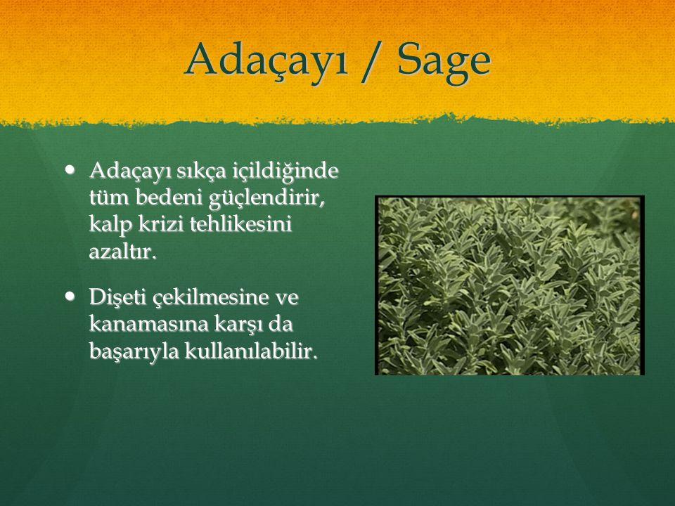 Adaçayı / Sage Adaçayı sıkça içildiğinde tüm bedeni güçlendirir, kalp krizi tehlikesini azaltır. Adaçayı sıkça içildiğinde tüm bedeni güçlendirir, kal