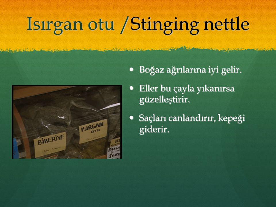 Isırgan otu /Stinging nettle Boğaz ağrılarına iyi gelir. Boğaz ağrılarına iyi gelir. Eller bu çayla yıkanırsa güzelleştirir. Eller bu çayla yıkanırsa
