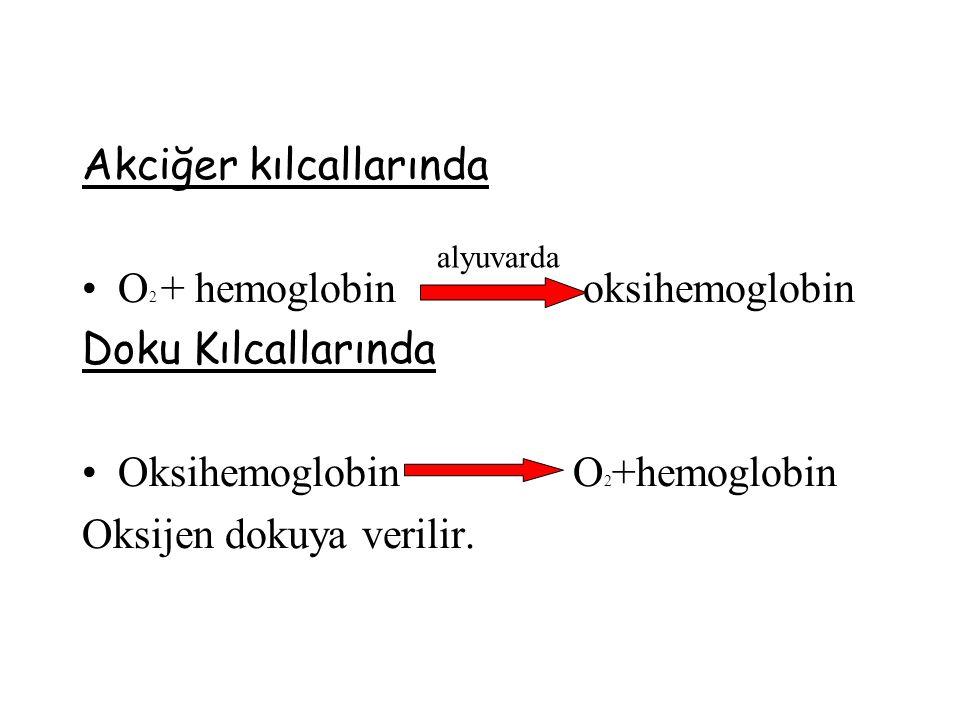 Akciğer kılcallarında O 2 + hemoglobin oksihemoglobin Doku Kılcallarında Oksihemoglobin O 2 +hemoglobin Oksijen dokuya verilir.
