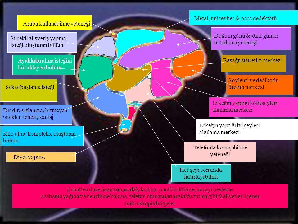 Kadın Beyni Kadınların sıkça kullandıkları beyin bölümleri ile ilgili detaylı ve kapsamlı bir araştırmanın sonuçlarını burada sunuyoruz * Bu araştırma