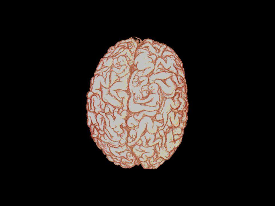 Şimdide bir erkek beyninin faaliyetlerini görelim