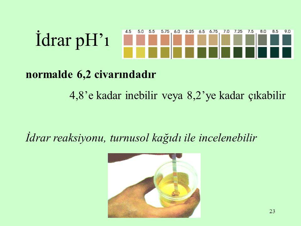 23 İdrar pH'ı normalde 6,2 civarındadır 4,8'e kadar inebilir veya 8,2'ye kadar çıkabilir İdrar reaksiyonu, turnusol kağıdı ile incelenebilir