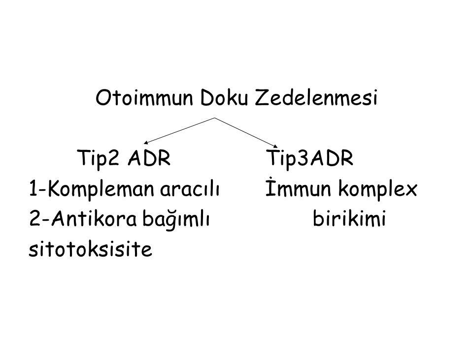 Otoimmun Doku Zedelenmesi Tip2 ADR Tip3ADR 1-Kompleman aracılıİmmun komplex 2-Antikora bağımlıbirikimi sitotoksisite