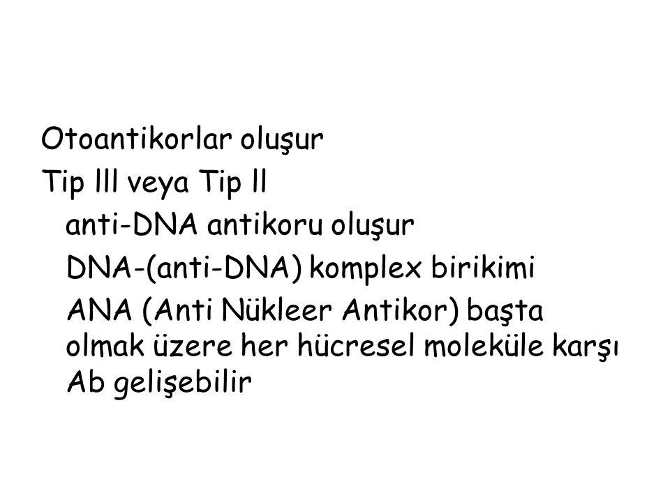 Otoantikorlar oluşur Tip lll veya Tip ll anti-DNA antikoru oluşur DNA-(anti-DNA) komplex birikimi ANA (Anti Nükleer Antikor) başta olmak üzere her hüc
