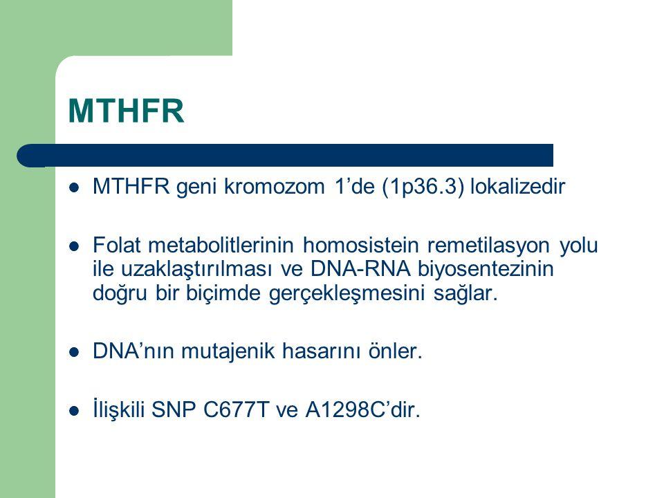 MTHFR MTHFR geni kromozom 1'de (1p36.3) lokalizedir Folat metabolitlerinin homosistein remetilasyon yolu ile uzaklaştırılması ve DNA-RNA biyosentezini