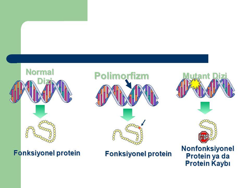 Fonksiyonel protein Normal Dizi Fonksiyonel protein Polimorfizm Nonfonksiyonel Protein ya da Protein Kaybı Mutant Dizi