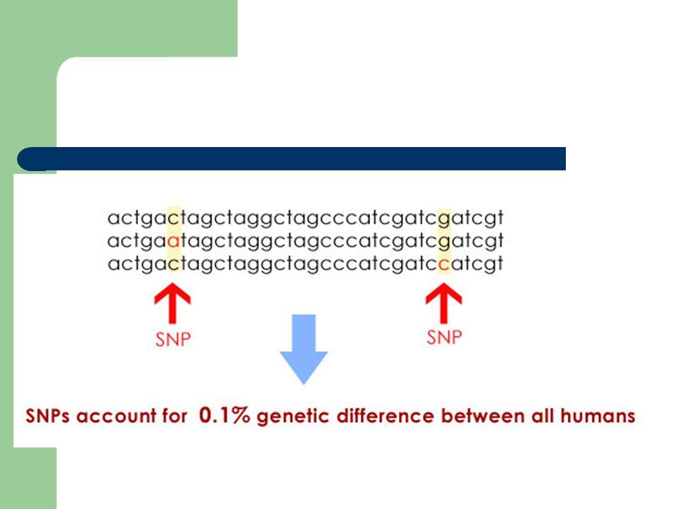 SNP'in Kullanım Alanları Tanı ve Risk Profillenmesinde Aday Gen Tayini ve Haritalamada Polimorfizm Testlerinde Epidemiyolojik Çalışma Planlamasında Farmakogenomik ve Fizyolojik Genomikte Çevresel Uyaranlar ve Diete Yanıtta Adli Tıpta