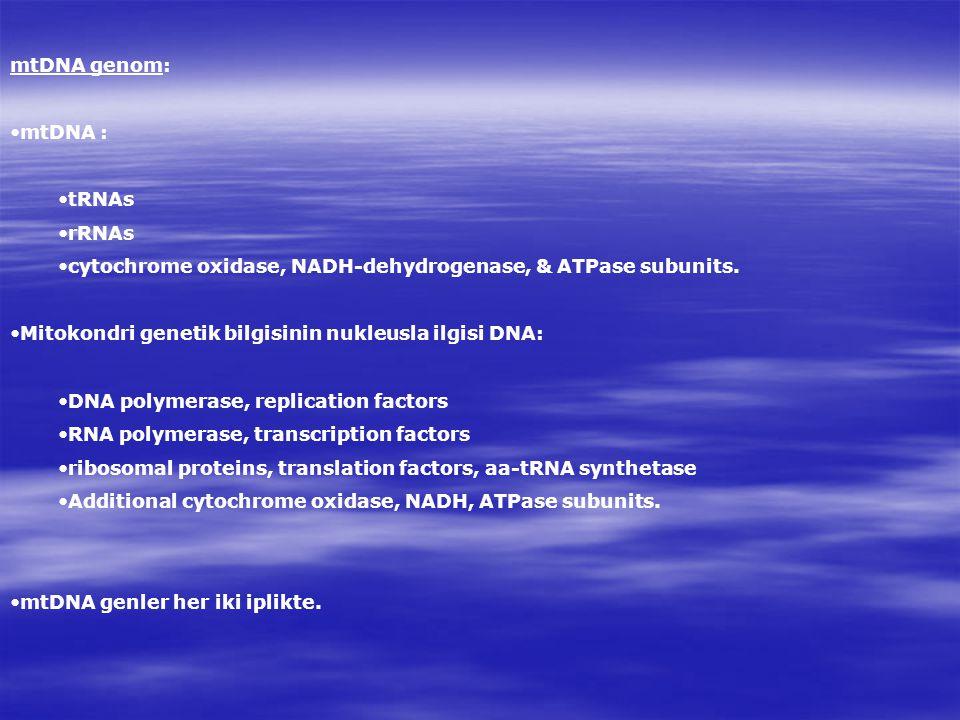 mtDNA genom: mtDNA : tRNAs rRNAs cytochrome oxidase, NADH-dehydrogenase, & ATPase subunits.
