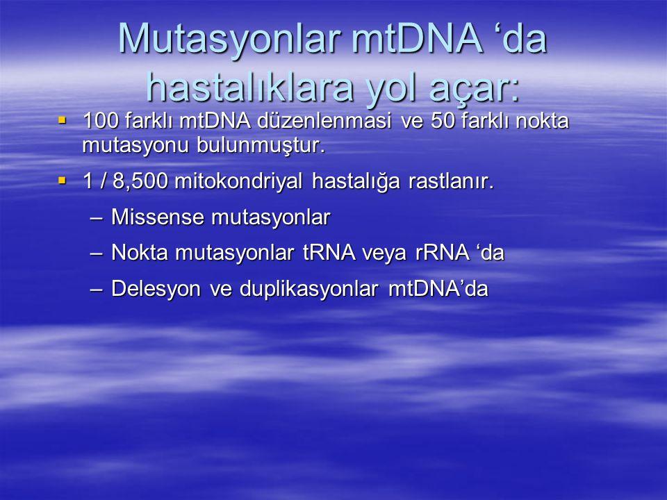  100 farklı mtDNA düzenlenmasi ve 50 farklı nokta mutasyonu bulunmuştur.