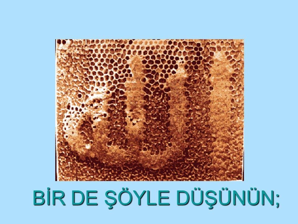 HERKES SENİ ARIYOR.