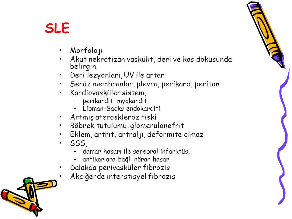 SLE Morfoloji Akut nekrotizan vaskülit, deri ve kas dokusunda belirgin Deri lezyonları, UV ile artar Seröz membranlar, plevra, perikard, periton Kardi