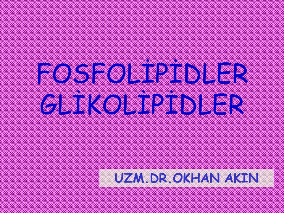 Depo lipidleri (nötral) TAGGliserofosfolipidSfingolipid GLİSEROLGLİSEROL FFA SFINGOZİNSFINGOZİN SFİNGOZİNSFİNGOZİN Mono veya oligosakkarid kolinPO 4 FOSFOLİPİD GLİSEROLGLİSEROL FFA alkolPO 4 FFA GLİKOLİPİD Membran lipidleri (polar)