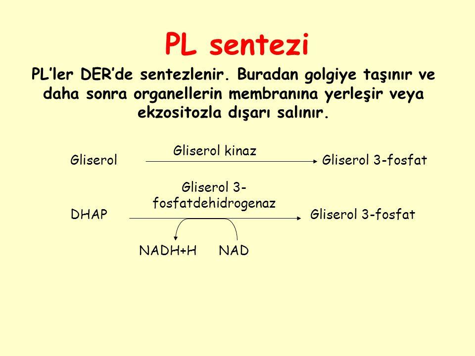 PL sentezi Gliserol 3- fosfatdehidrogenaz Gliserol kinaz GliserolGliserol 3-fosfat DHAPGliserol 3-fosfat NADH+HNAD PL'ler DER'de sentezlenir. Buradan