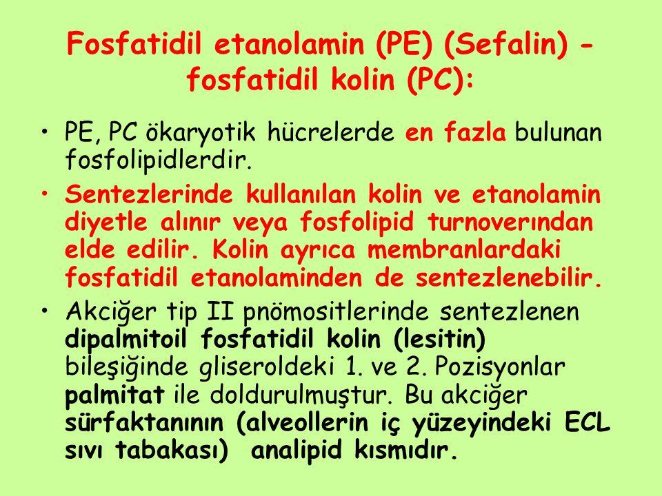 Fosfatidil etanolamin (PE) (Sefalin) - fosfatidil kolin (PC): PE, PC ökaryotik hücrelerde en fazla bulunan fosfolipidlerdir. Sentezlerinde kullanılan