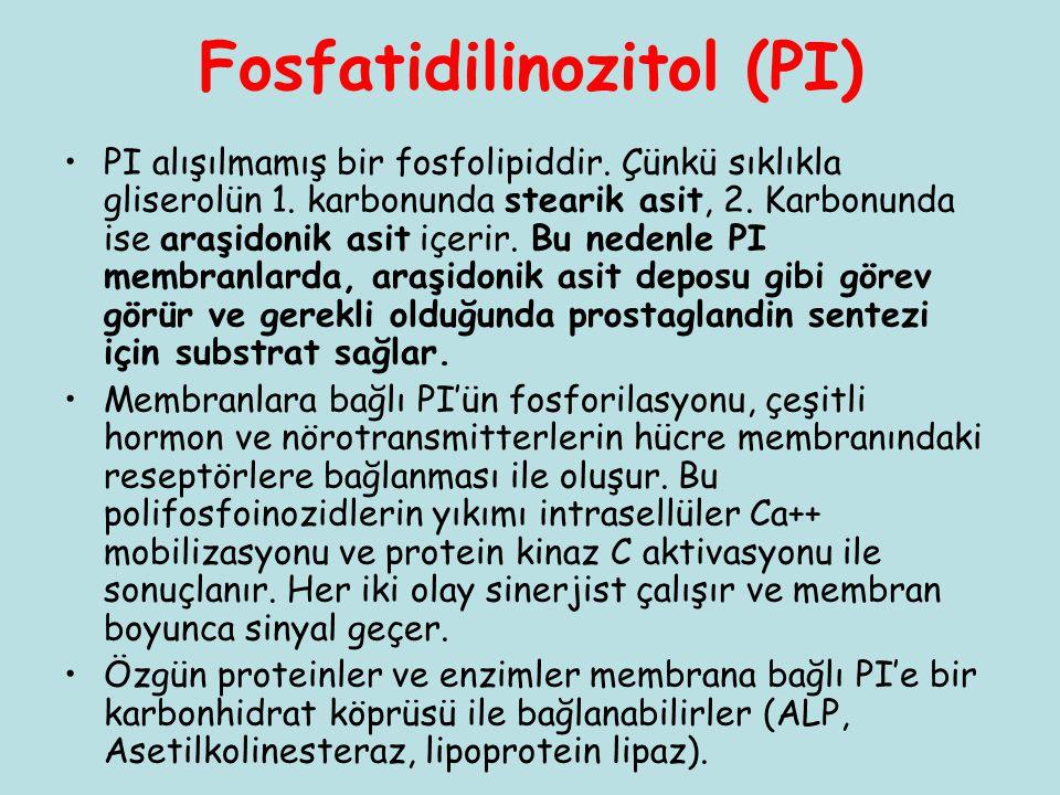 Fosfatidilinozitol (PI) PI alışılmamış bir fosfolipiddir. Çünkü sıklıkla gliserolün 1. karbonunda stearik asit, 2. Karbonunda ise araşidonik asit içer
