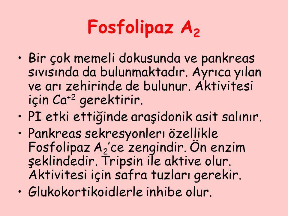 Fosfolipaz A 2 Bir çok memeli dokusunda ve pankreas sıvısında da bulunmaktadır. Ayrıca yılan ve arı zehirinde de bulunur. Aktivitesi için Ca +2 gerekt