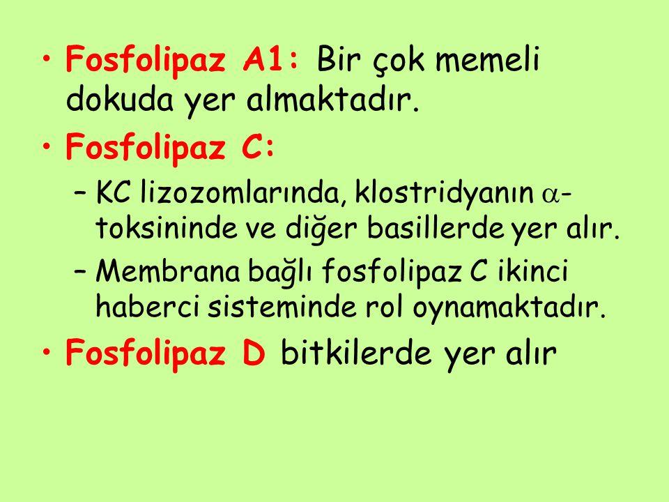 Fosfolipaz A1: Bir çok memeli dokuda yer almaktadır. Fosfolipaz C: –KC lizozomlarında, klostridyanın  - toksininde ve diğer basillerde yer alır. –Mem