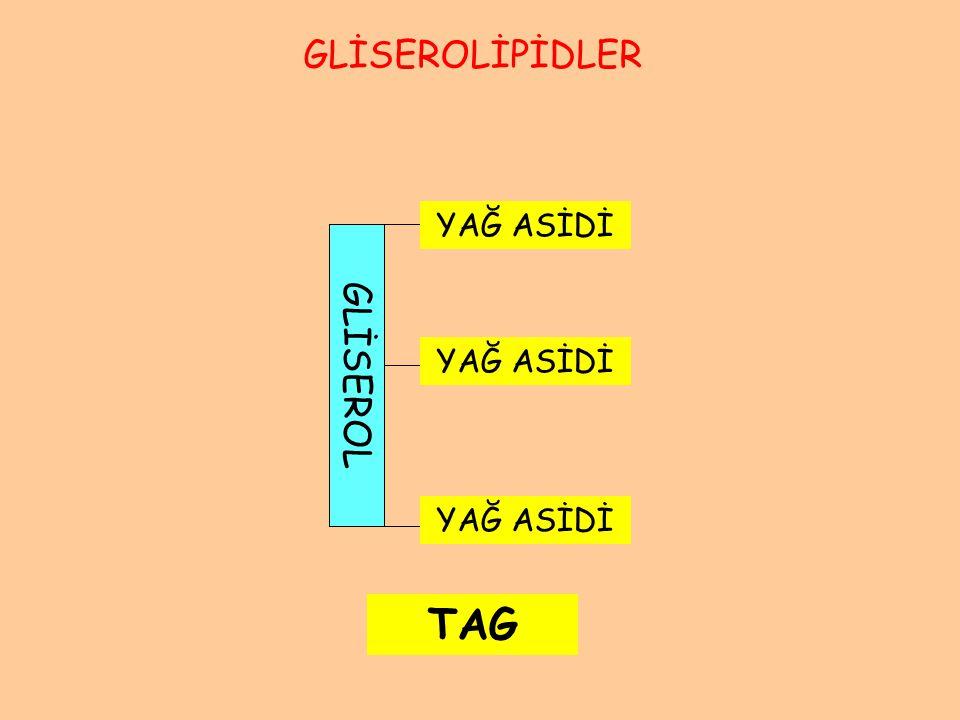 KoA Açil-transferaz Yağ asidi Yağ açil-KoA Gliserol 3-fosfat PO 4 GLİSEROLGLİSEROL Lizofosfatidik asid PO 4 GLİSEROLGLİSEROL KoA Açil-transferaz Yağ asidi Yağ açil-KoA Fosfatidik asid PO 4 GLİSEROLGLİSEROL Yağ asidi