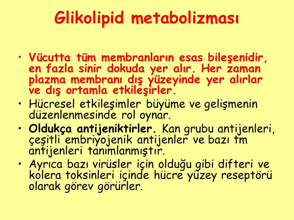 Glikolipid metabolizması Vücutta tüm membranların esas bileşenidir, en fazla sinir dokuda yer alır. Her zaman plazma membranı dış yüzeyinde yer alırla