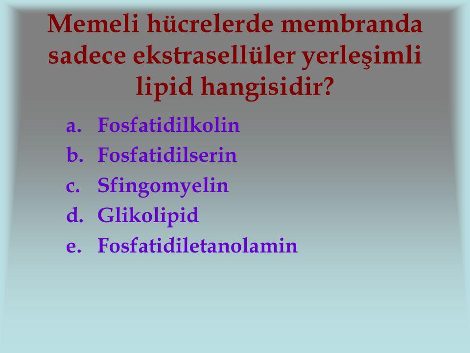 Memeli hücrelerde membranda sadece ekstrasellüler yerleşimli lipid hangisidir? a.Fosfatidilkolin b.Fosfatidilserin c.Sfingomyelin d.Glikolipid e.Fosfa